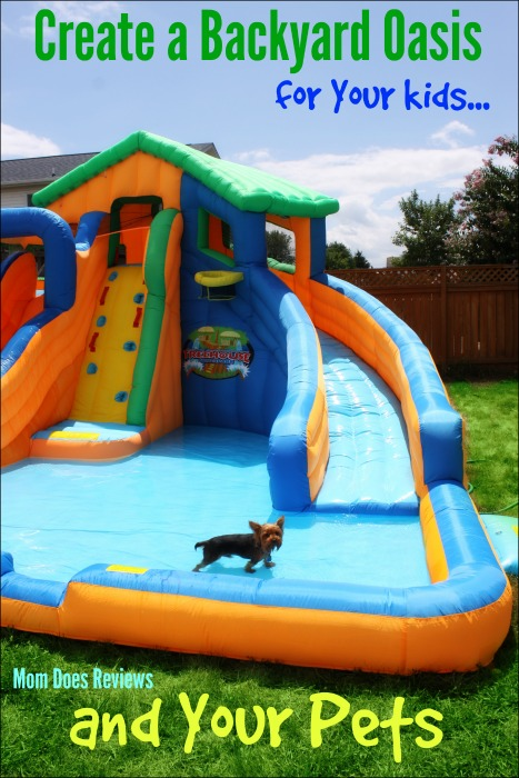 Fun Backyard Toys For Dogs