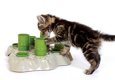 aikiou with kitty stimulo3