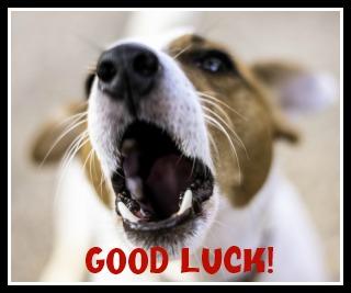 dog good luck