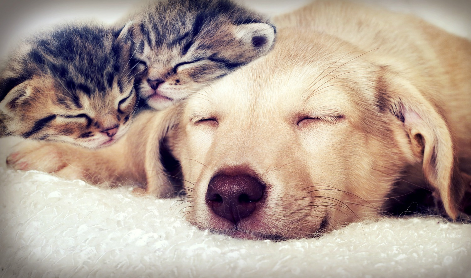 Puppy And Kitten Sleeping 100 Night Challenge- A...