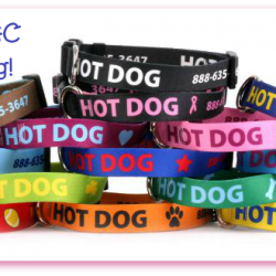 Hot Dog win Personalized Collars