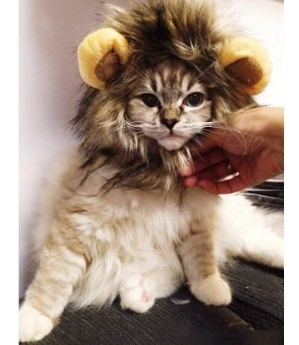 Cat Costume Wigs 9
