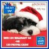walmart ecard 20 flash 12 4