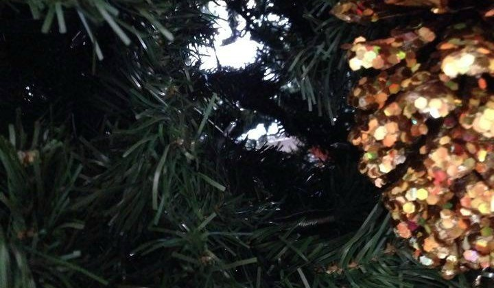 Do You Have Holes In Your Tree? #Blessings #Christmas