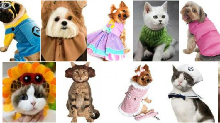 Dress up your pet day images