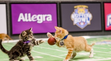 Join us for the #KittenBowl III, Sunday 2/7 12p est- So Much Kitty Cuteness in one Place!