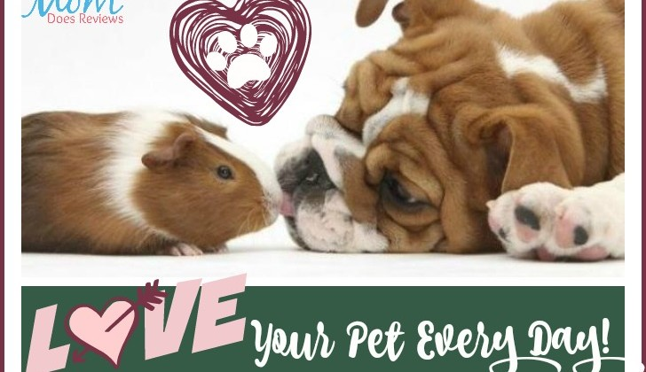 10 Ways to Celebrate National Love Your Pet Day!