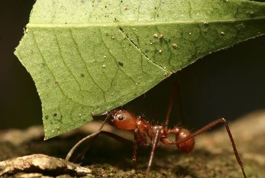 Tips to Keep Ants Out of the Kitchen This Summer