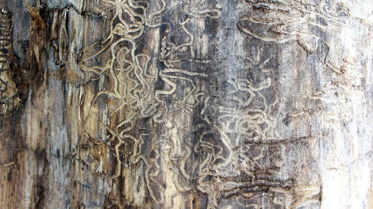 How to Prevent Termites and Other Pests from Infesting your Home