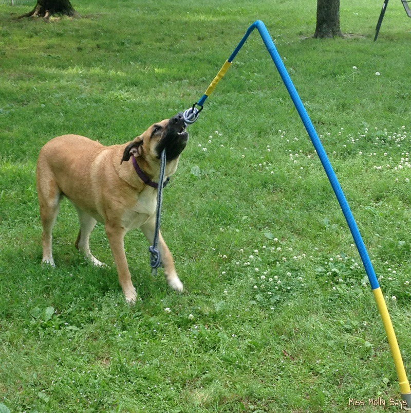 Dog Tether Ball Toy