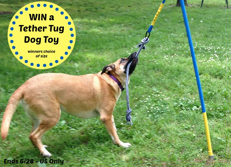 Tether Tug Dog Toy Video