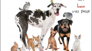Pet Insurance- for Those Who Love and Protect their Pets