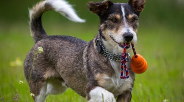 Pet Acupuncture: How Alternative Treatments Can Help Your Pooch