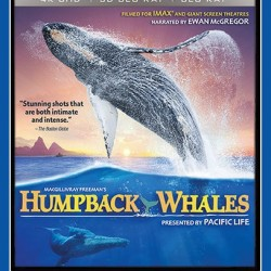 humpback-4k-dvd-win