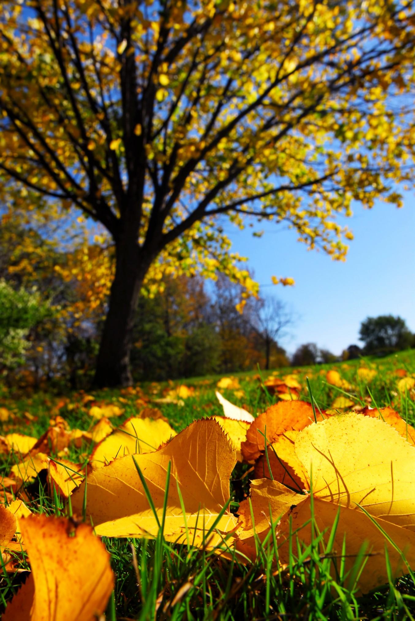 Fall Foliage Vacation