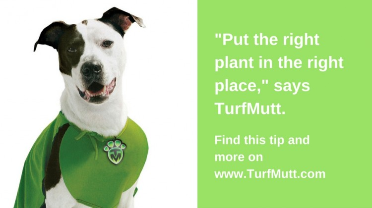 TurfMutt Inspires Kids To Care For Living Landscapes, Get Outside! #TurfMuttTips