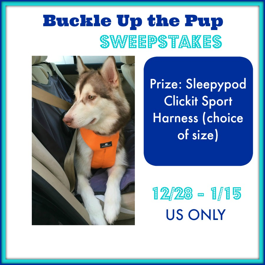 buckle-up-the-pup-sweepstakes