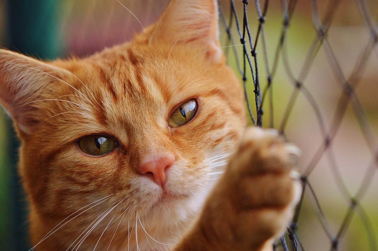 cat-1044750_1280