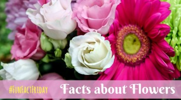 #FunFactFriday-  Facts about Flowers- What do they Mean?