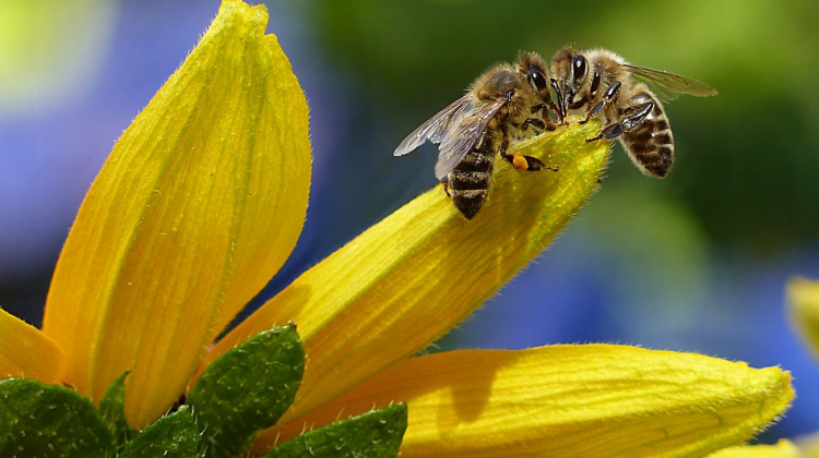 In Home Pests Are Not The Bees Knees: 4 Tips For Exterminating Them Eternally