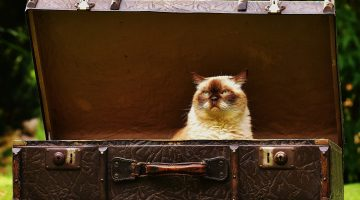 Pet Tips: How to Travel with Your Cat