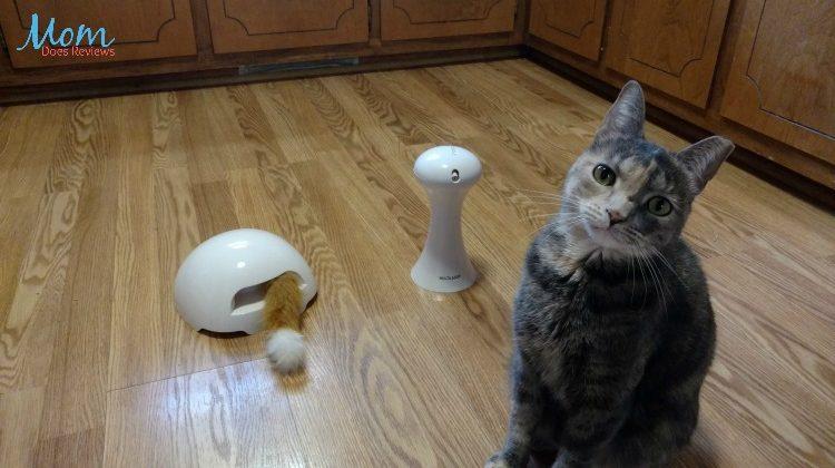 PetSafe Introduces a New Line of FUN Cat Toys: FroliCat #Review #Petpalooza2