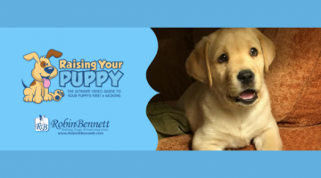 10 Tips for Raising a Puppy – Get the Ultimate Guide to Raising your Puppy Video Series! #ad
