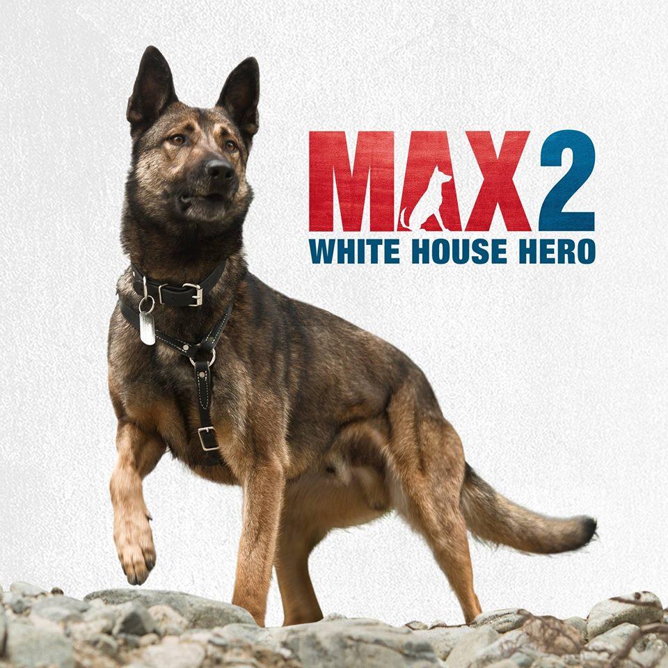 White German Shepherd Service Dog