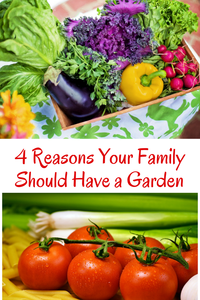 4 Reasons why your family should Have a Garden