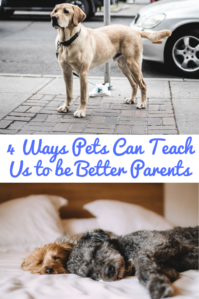 Pet can teach us to be better parents!