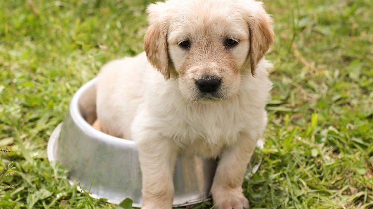 Hot Dog: 4 Pet-Friendly Solutions To Summer Discomfort #MDRSummerFun