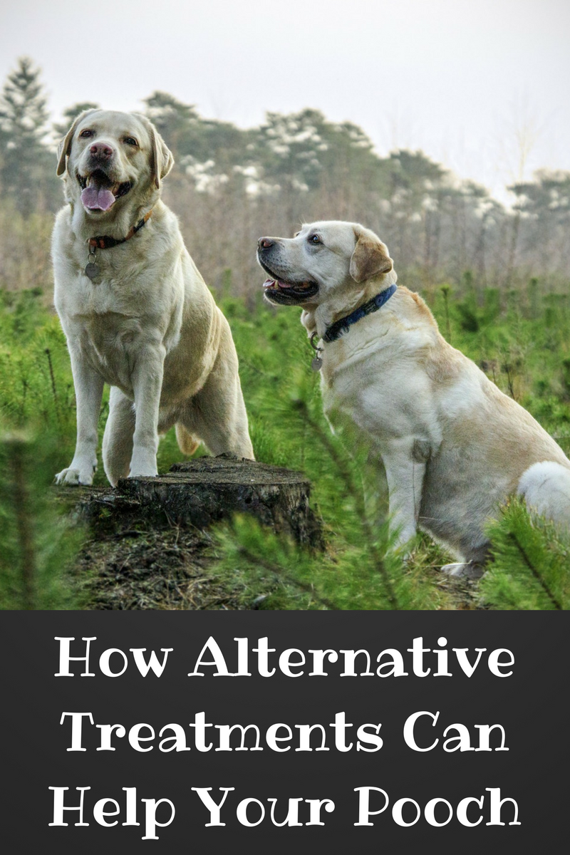 How Alternative Treatments Can Help Your Pooch