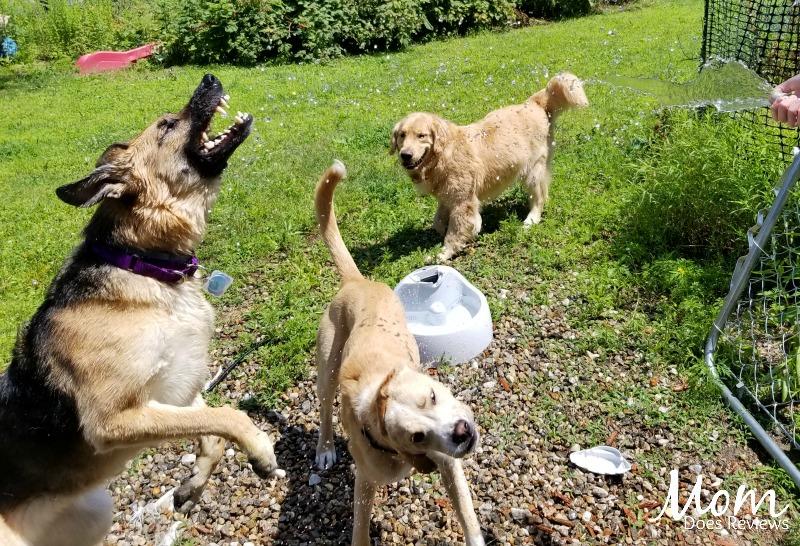 Dogs Summer Fun