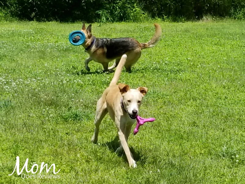 Frisbee summer fun