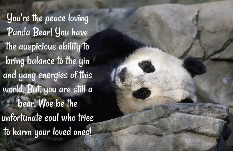 Panda is my Spirit Animal