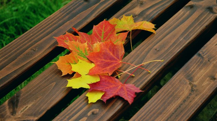 Almost Autumn: 3 Ways to Prepare Your Home for Falling Temperatures