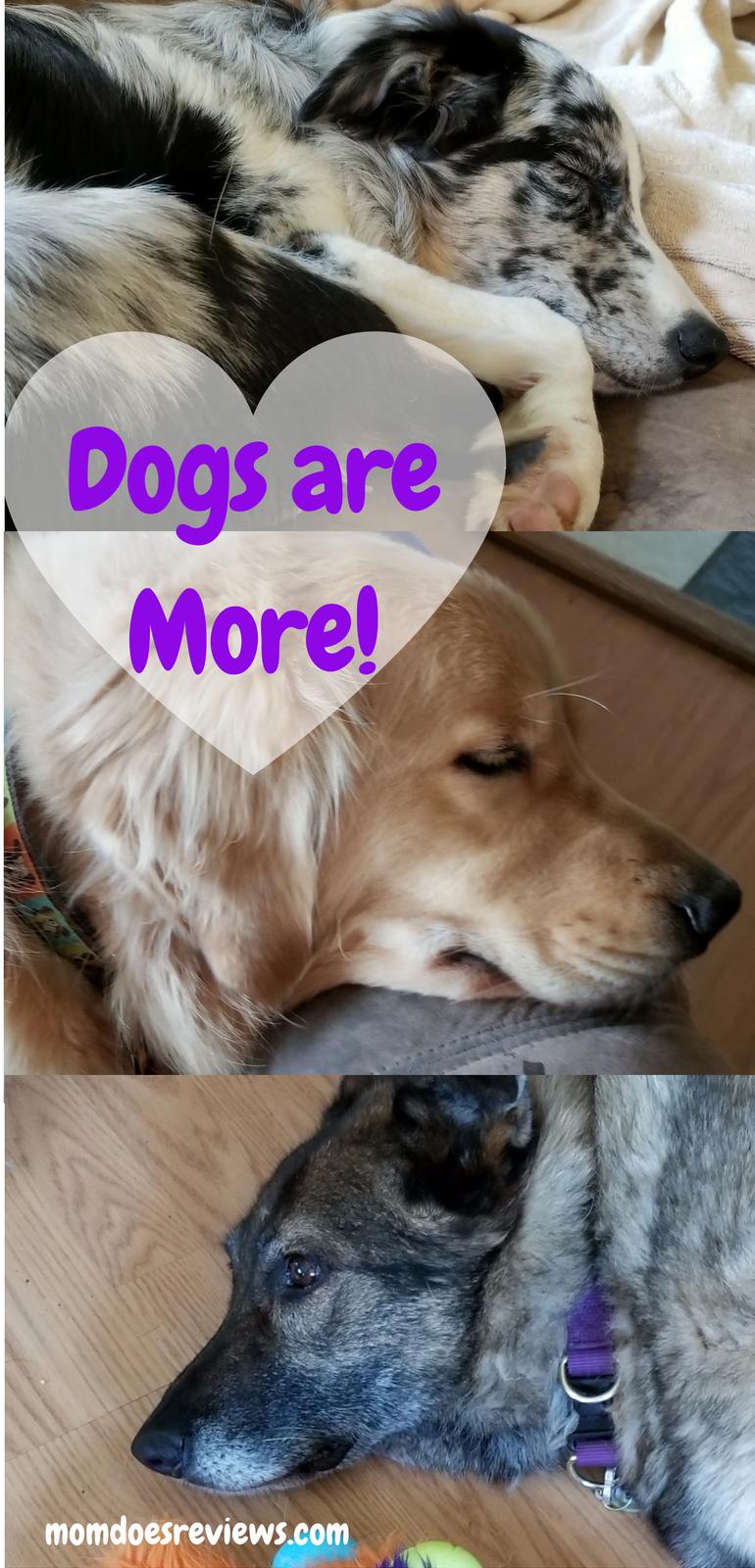 Dogs are More #IC #DogsareMore #ad