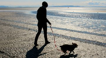 How Dogs Can Help you Get in Better Shape