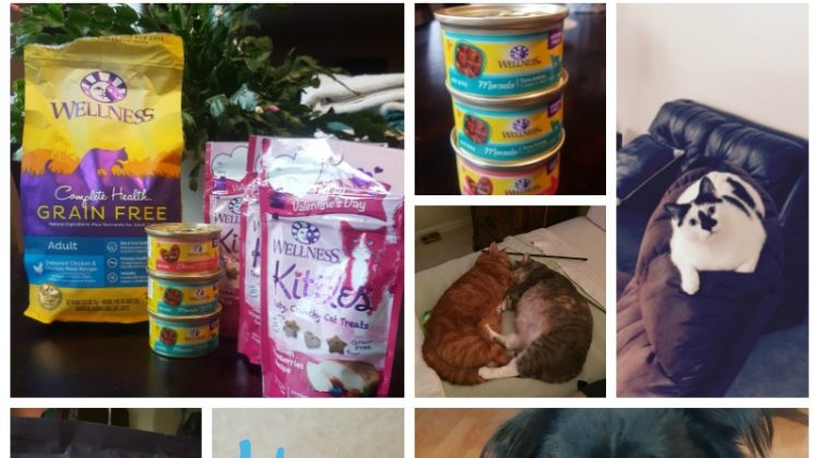 Sweet Treats for Your Pets #Sweet2018