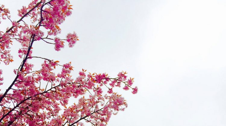 4 Ways to Prepare Your Home for Spring