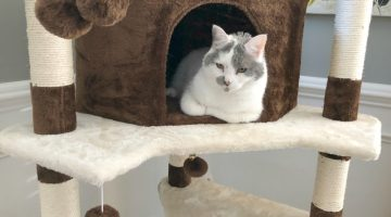 Spoil Your Cats With A Cat Condo From SONGMICS #Review