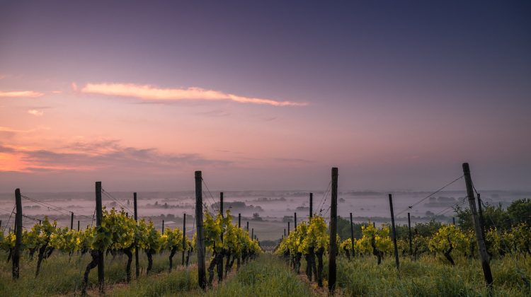 Travel to Healdsburg to Discover Beauty and Culture