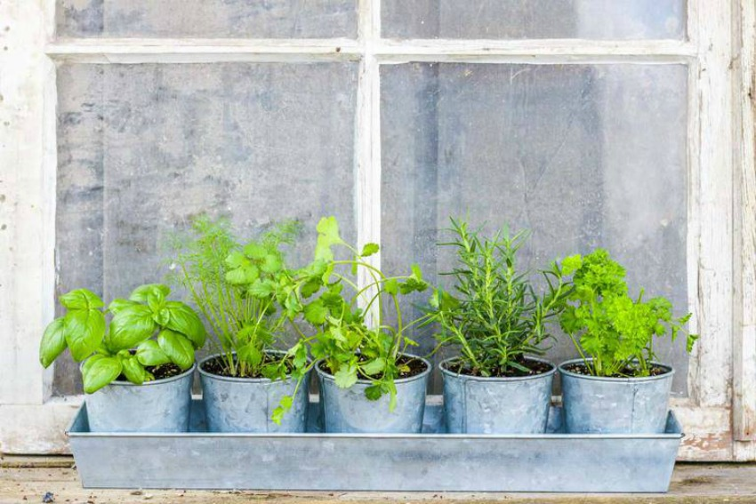 How to Plant a Window Herb Garden