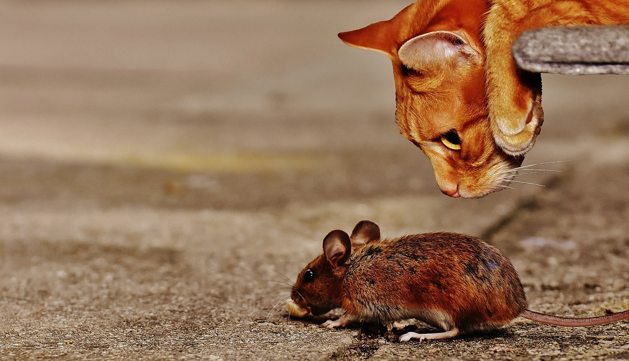 Should you Be Concerned If your Pet Eats a Rat or Mouse?