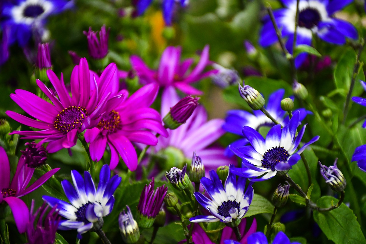 Colorful Summer Garden Flowers