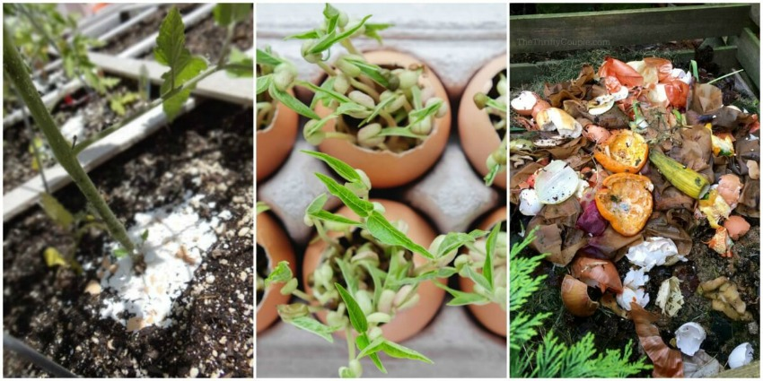reasons-to-use-eggshells-in-the-garden