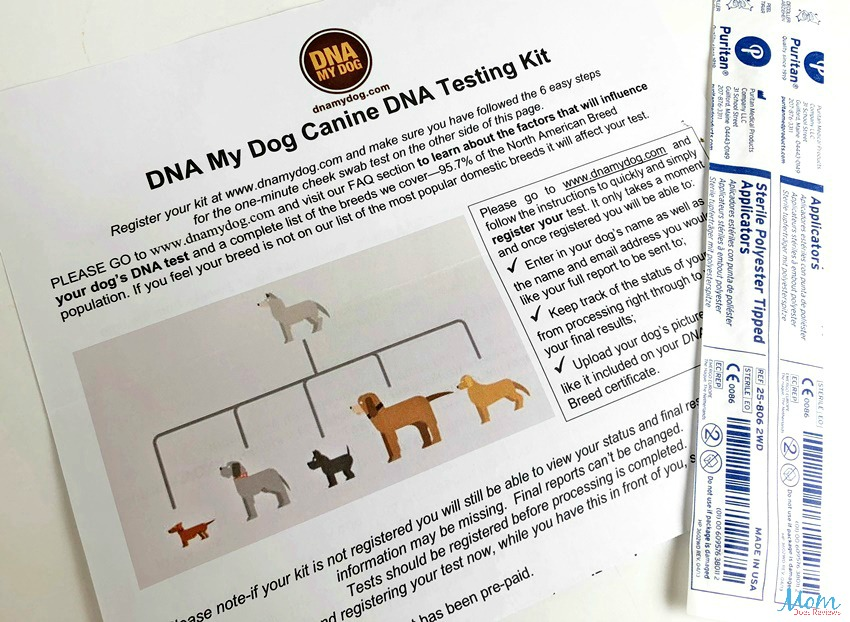 DNA My Dog kit