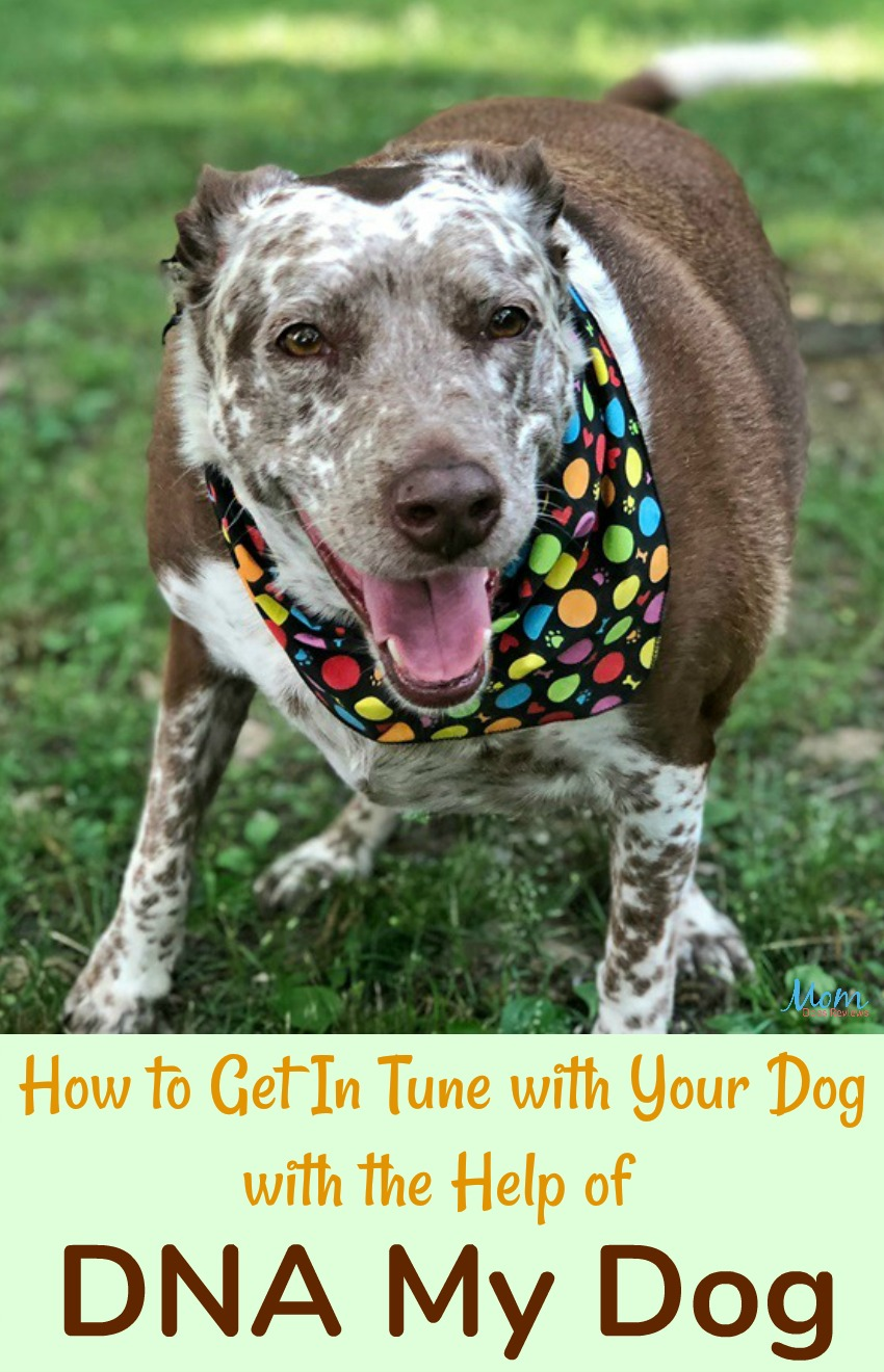 How to Get in Touch with Your Dog with the Help of DNA My Dog