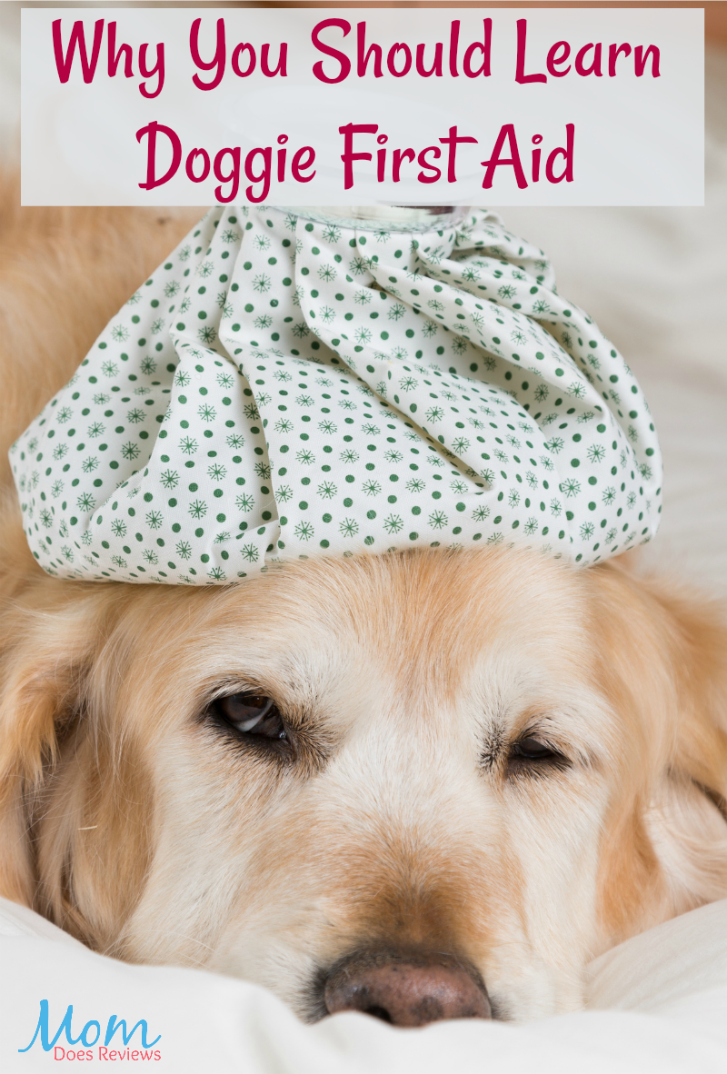 Why You Should Learn Doggie First Aid