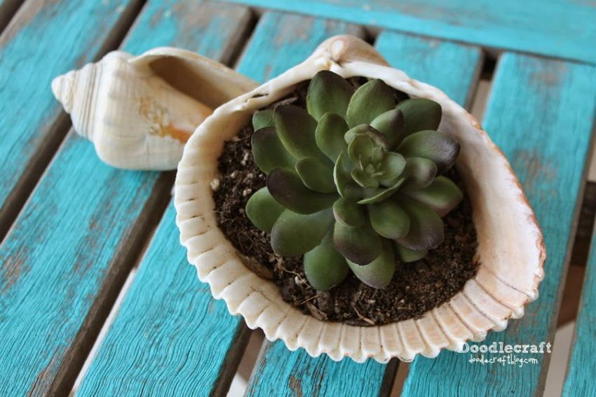 Seashell Succulent Planter